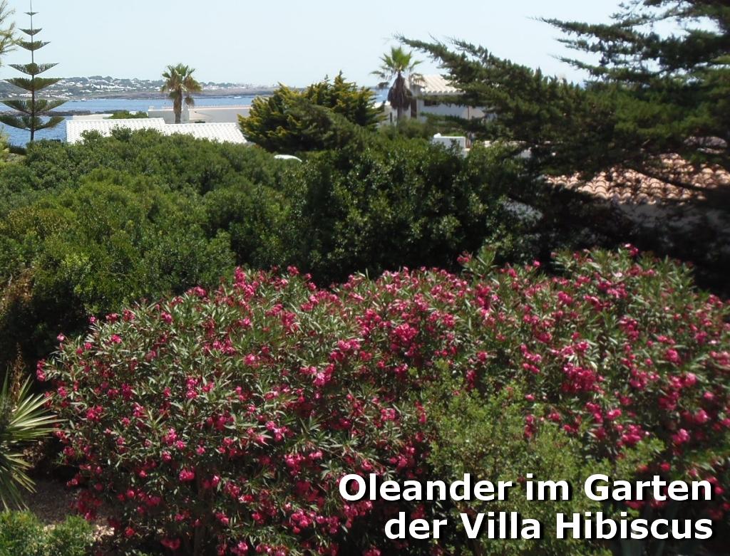 villa hibiscus