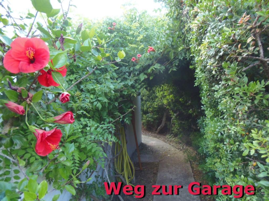 Villa Hibiscus: Weg-zur-Garage